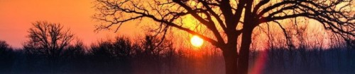 cropped-sunset-wfog-tree.jpg